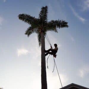 עבודת גובה מקצועית, עם סנפלינג על עץ או גג