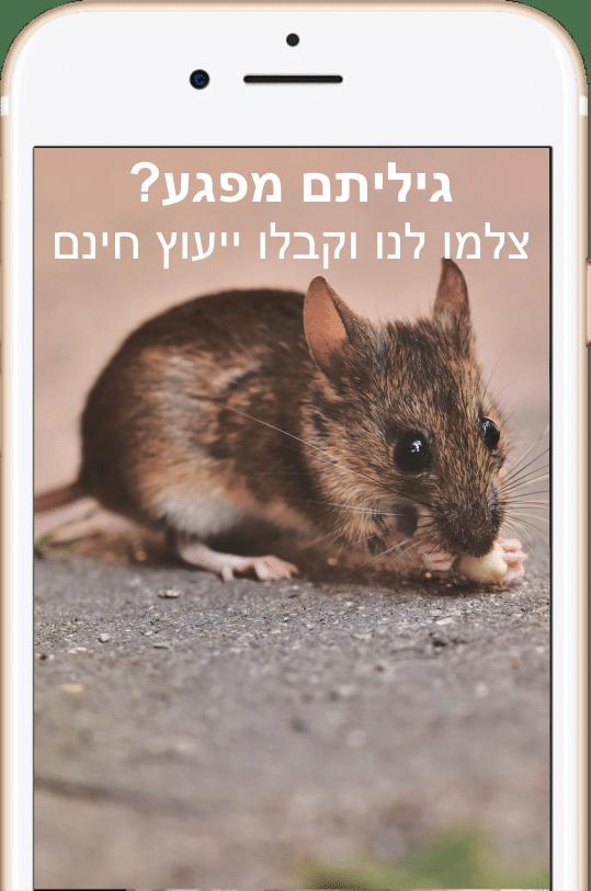 עכברים וחולדות הם חיות חמודות אבל יכולות לעשות הרבה נזקים